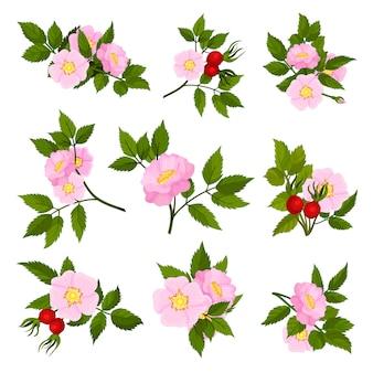 Zbiór obrazów różowych kwiatów dzikiej róży.