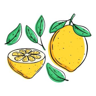 Zbiór owoców cytryny na białym tle
