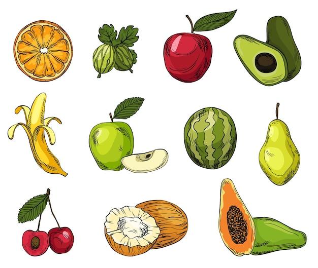 Zbiór owoców eko w stylu szkicu kolorowych linii