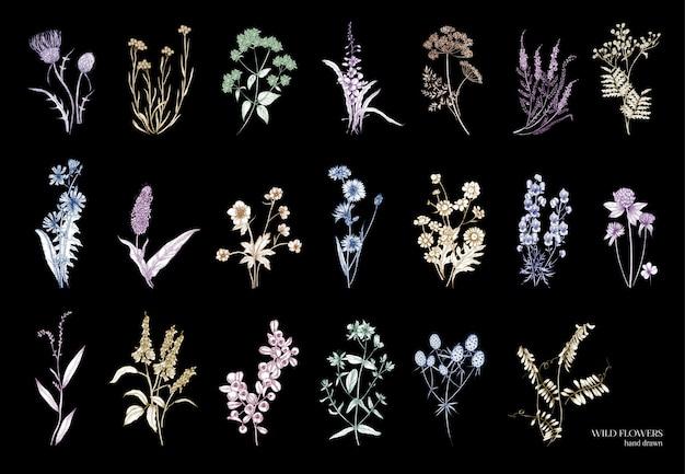 Zbiór pięknych dzikich ziół na białym tle na czarnym tle
