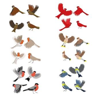 Zbiór ptaków rudzik, czerwony kardynał, cycki, wróbel, gile, jemiołuszka na białym tle