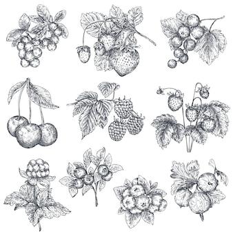 Zbiór ręcznie rysowane naszkicowanych jagód na białym tle