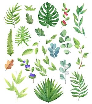 Zbiór roślin akwarelowych, gałęzi, zieleni, liści. elementy do projektowania, bio. tropikalne liście