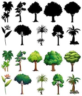 Zbiór roślin i drzew z jego sylwetka