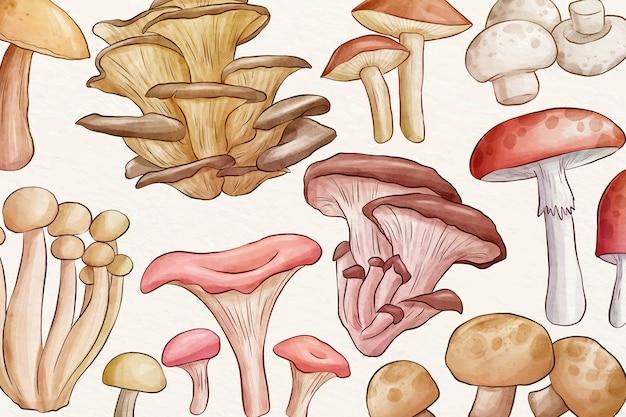 Zbiór różnych grzybów tle