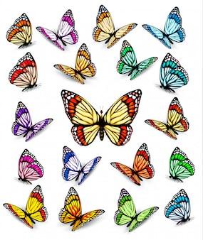 Zbiór różnych kolorowych motyli.