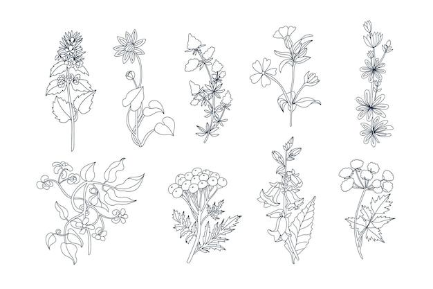 Zbiór różnych kwiatów w stylu szkicu