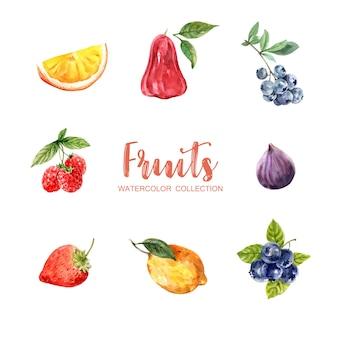 Zbiór różnych na białym tle akwarela owoców
