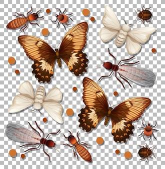 Zbiór różnych owadów na białym tle