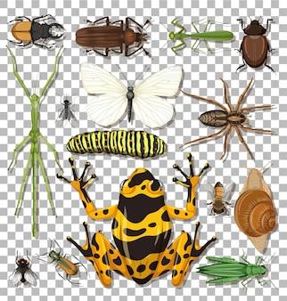 Zbiór różnych owadów na przezroczystym tle