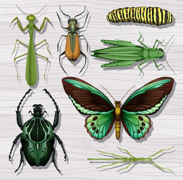 Zbiór różnych owadów na tle białej tapety drewniane