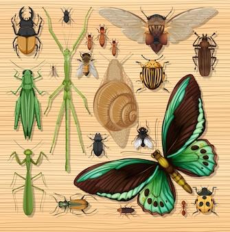 Zbiór różnych owadów na tle tapety drewniane
