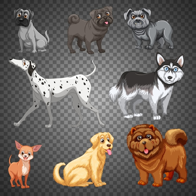 Zbiór różnych psów na białym tle