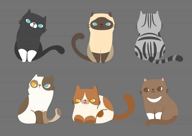 Zbiór różnych ras kotów w różnych pozach.
