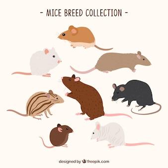 Zbiór różnych ras myszy
