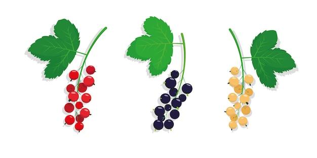 Zbiór różnych rodzajów porzeczek z liśćmi na białym tle.