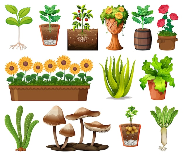 Zbiór różnych roślin w doniczkach na białym tle
