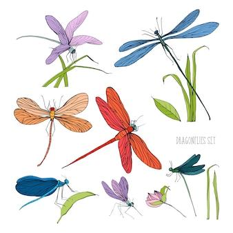 Zbiór różnych ważek w różnych pozach. kolorowy ręcznie rysowane kolekcja latający sumator. ilustracja.