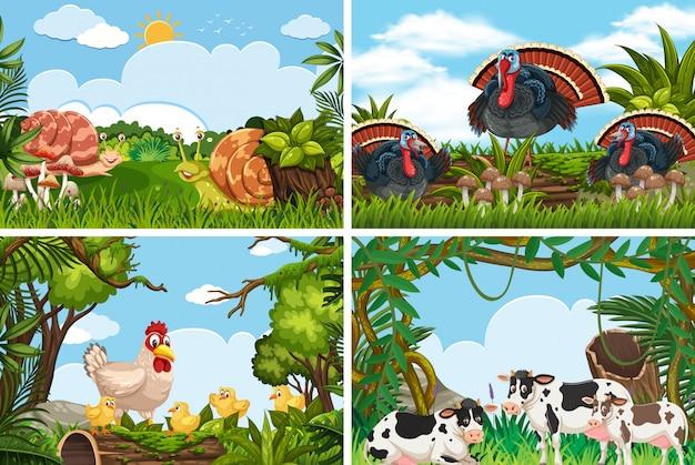 Zbiór różnych zwierząt w scenach przyrodniczych