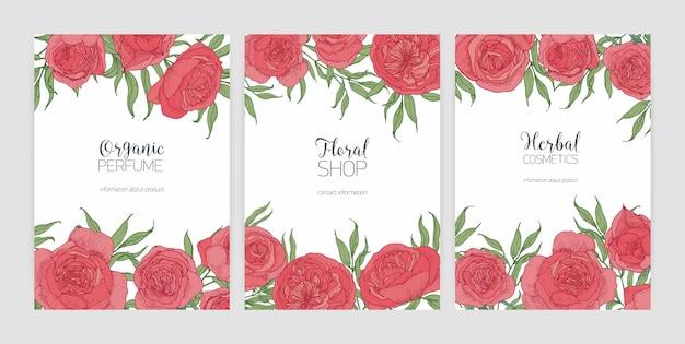 Zbiór szablonów kart z przepięknymi różowymi różami prowansalskimi lub kapustnymi i miejscem na tekst.