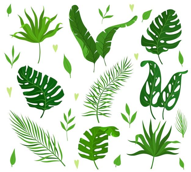 Zbiór tropikalnych liści o różnych kształtach.