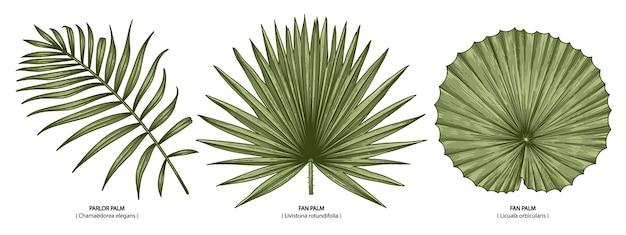 Zbiór tropikalnych liści palmowych na białym tle