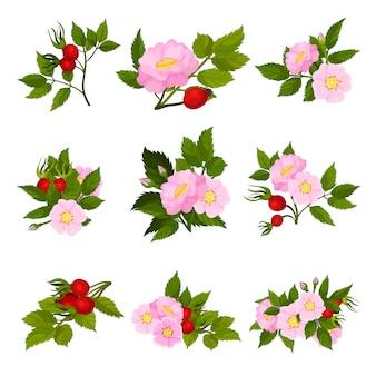 Zbiór zdjęć czerwonych owoców i różowych kwiatów dzikiej róży.