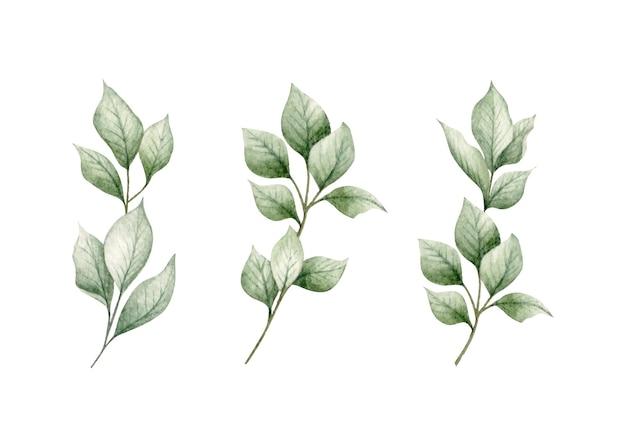 Zbiór zielonych liści oddziałów na białym tle