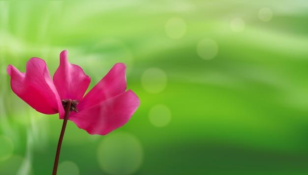 Zbliżenie kwiat na zielonym tle bokeh.