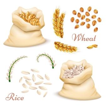 Zboża rolnicze - pszenica i ryż na białym tle. wektor realistyczne ziarna, uszy clipartów kolekcja