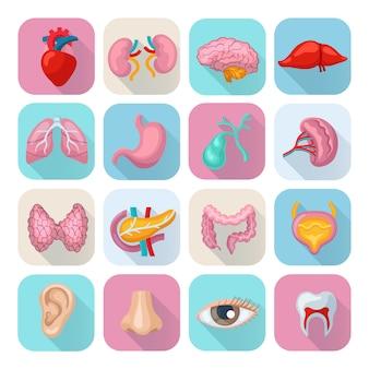 Zdrowe ludzkie ciało narządy płaskie długie cień ikony ustaw