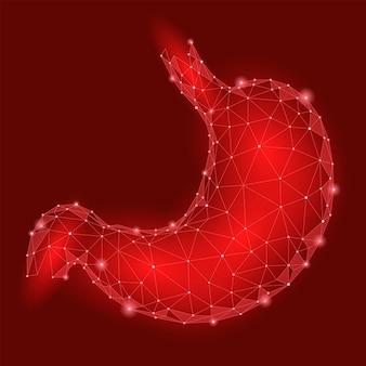 Zdrowy żołądek człowieka. narząd trawienny wewnętrzny. low poly connected