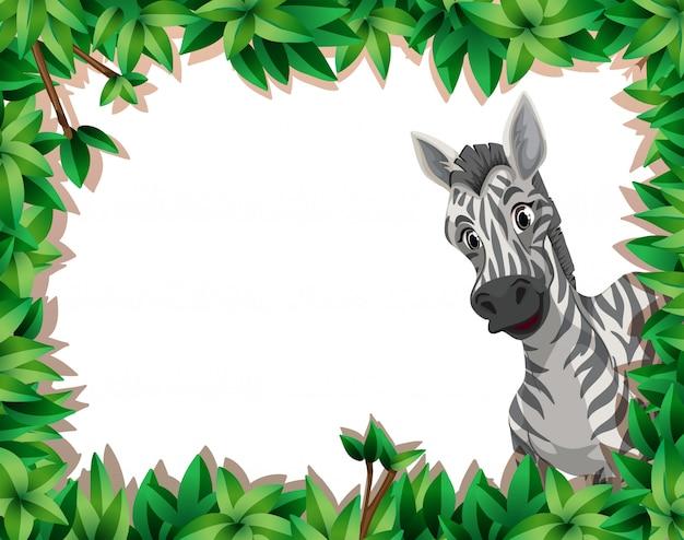 Zebra w naturze rama z copyspace