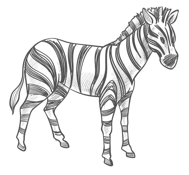 Zebra zwierzę, koński ssak z paskiem szkicu