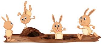 Zestaw ładny królik