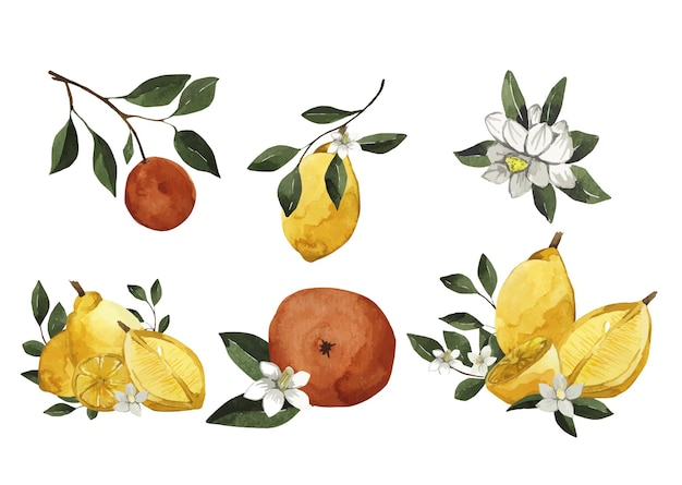 Zestaw akwarela, cytrusy z kwiatami i liśćmi