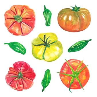 Zestaw akwarela czerwonych pomidorów i kolekcji zielonych warzyw wegańskich chili