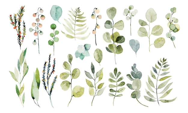 Zestaw akwarela gałęzi eukaliptusa i innych ilustracji roślin zielonych