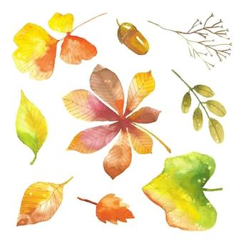 Zestaw akwarela liści jesienią