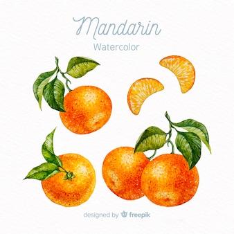 Zestaw akwarela mandarynki
