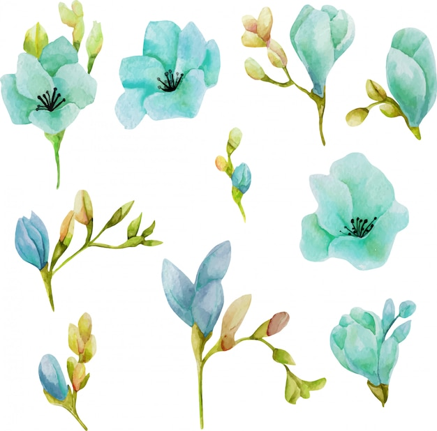 Zestaw akwarela niebieskie kwiaty frezji