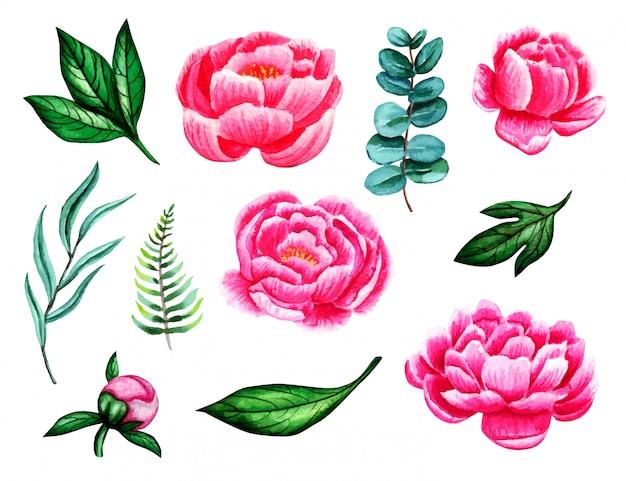 Zestaw akwarela piwonie, paproci, eukaliptusa i liści na białym tle. ilustracja kwiat