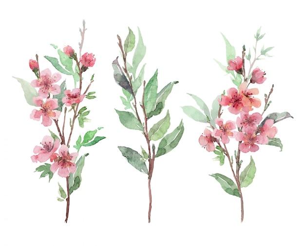 Zestaw akwarela różowe kwitnące gałęzie. wiśnia, kwiat jabłoni