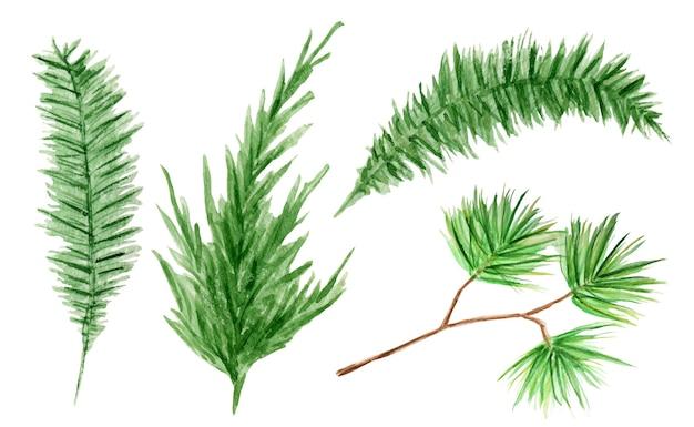 Zestaw akwarela wiecznie zielone gałęzie drzew iglastych. ilustracja na białym tle