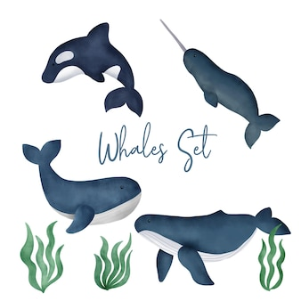 Zestaw akwarela wielorybów.