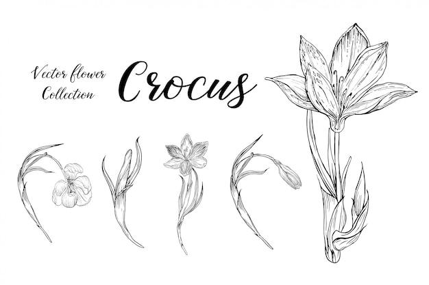 Zestaw aranżacji kwiatowych z kwiatami crocus