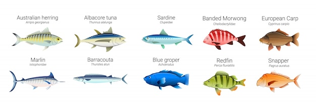 Zestaw australijskich odmian ryb