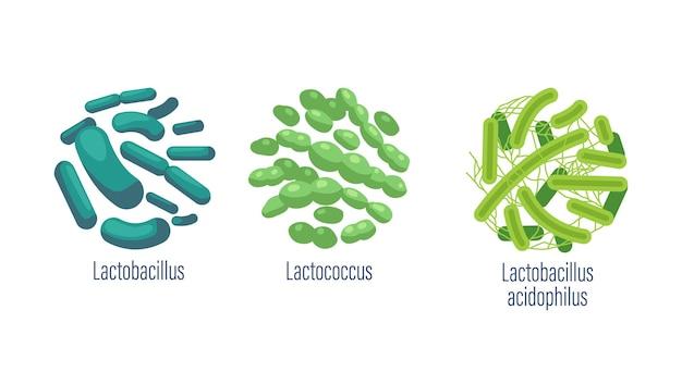 Zestaw bakterii probiotycznych lactobacillus, lactococcus i lactobacillus acidophilus dobrych drobnoustrojów dla zdrowia jelit i flory bakteryjnej na białym tle. ilustracja kreskówka wektor, ikony