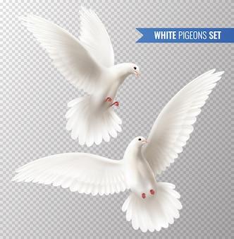Zestaw białych gołębi