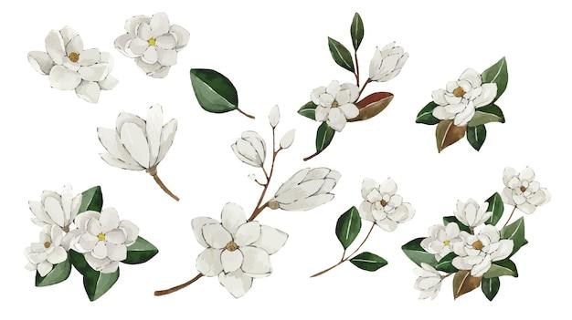 Zestaw białych kwiatów magnolii akwarela